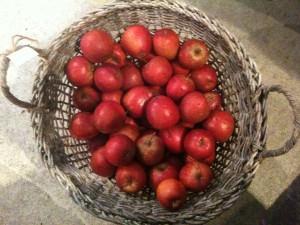 Pigion æbler i massevis