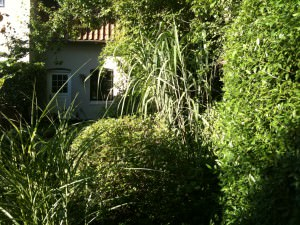 Græsser og Buxbom