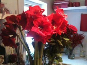 Røde Amaryllis