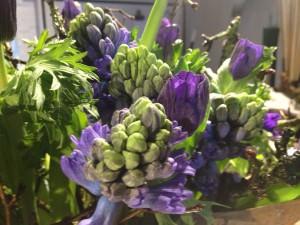 Hyacinther og franske anemoner